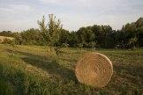 Rolnictwo ekologiczne w województwie kujawsko-pomorskim